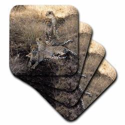 3dRose Ceramic Tile Coasters - South African 4 Cheetahs posing looking in both directions - set of 4 (cst_20108_3) Ceramic in Brown | Wayfair