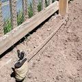 August Grove® Kerri Cast Iron Rooster Twine Holder Garden Stake Metal, Size 4.75 H x 12.0 W x 2.0 D in | Wayfair 4B68031F2C99498CA73C754A2D05F726