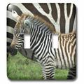 3dRose Common Zebra Kenya Africa 2-Gang Toggle Light Switch Wall Plate in Green, Size 5.0 H x 4.5 W x 0.06 D in   Wayfair lsp_9859_2