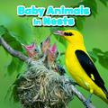 Baby Animals in Nests (Little Pebble: Baby Animals and Their Homes)