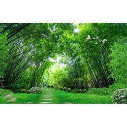 "GK Wall Design 3D Photo Jungle Landscape TEXTILE Wallpaper Fabric in Green, Size 106""L x 187""W | Wayfair GKWP000084W187H106_3D"