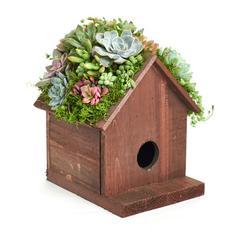 Home Botanicals Living Succulent Birdhouse Kit Planter