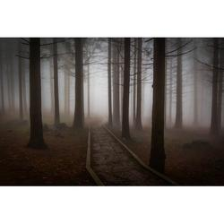 Misty Forest Pine Wood Forest Road Pine Mystic-20 Inch By 30 Inch Laminated Poster With Bright Colors And Vivid Imagery-Fits Perfectly In Many Attractive Frames