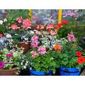 Flowering Pot Plants Plants Plant Display Pot-12 Inch BY 18 Inch Laminated Poster With Bright Colors And Vivid Imagery-Fits Perfectly In Many Attractive Frames