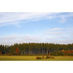Forest Pine Forest Field Nature Forest Landscape-12 Inch BY 18 Inch Laminated Poster With Bright Colors And Vivid Imagery-Fits Perfectly In Many Attractive Frames