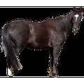 Animal Wild Animal Horse Free Nature Animal World-20 Inch By 30 Inch Laminated Poster With Bright Colors And Vivid Imagery-Fits Perfectly In Many Attractive Frames