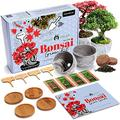 HOME GROWN Bonsai Tree Kit - Premium Bonsai Tree Starter Kit - 4 Variety of Seeds - Japanese Maple, Sacred Fig, Japanese Privet, and Cotoneaster - Grow Your Own Bonsai Trees