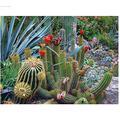 DIY Puzzle 500 Piece Cactus Flower Landscape Plant Jigsaw Puzzle for Kids Adult Jigsaw Large Puzzle Game Toys Gift
