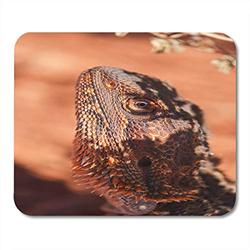 Mouse Pads Australia Orange Animal Wild Bearded Dragon Against Red Ochre Mouse Pad for notebooks, Desktop Computers mats Office Supplies