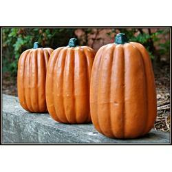 August Grove® Pumpkin Resin/Plastic/Resin in Brown, Size 7.0 H x 5.0 W x 5.0 D in   Wayfair AGTG3413 42833393
