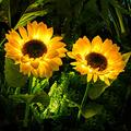 Outdoor Lights Sunflower Garden Lighting Decorative Stake for Courtyard Front Yard Patio Balcony LED Lamp Garden Decoration Lawn Light Outdoor Rainproof led Simulation Sunflower Flowers (2 Pack)