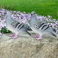 DAUERHAFT Pigeon Garden Decor Decoration Crafts Garden Decor, Durable Vivid Figurine Decor, for Garden Scenic Area Decoration Park Decoration for Landscape