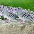 DAUERHAFT Decoration Crafts Garden Decor, Pigeon Garden Decor Figurine Decor, Vivid 2pcs for Garden for Landscape