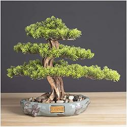 LXYLXY Artificial Bonsai Tree Decoration, Artificial Tree Bonsai Tree Houseplant Black Ceramic Round Pot and Pebble Tabletop Decoration Novelty Gift (Color : B)