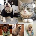 Colliers de style hip-hop pour chien, chaîne épaisse or plaqué, en plastique et identifié,
