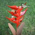 Red Heliconia Standing Bird Feeder Metal Flower Bird Feeder Wild Bird Feeders Outside Garden Art Metal Birdfeeder with Stand, Standing Bird Feeders for Outside Patio
