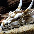 SIZHINAI Aquarium Decorations Dinosaur, Triceratops Skull Décor, Resin Made Skull Model for Reptiles Hideout, Fish Aquarium Accessories, Home Bar Décor