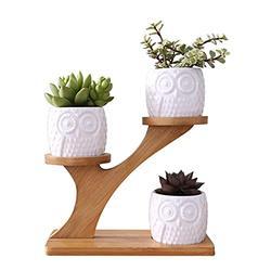 3Pcs Owl Succulent Pot Ceramic Garden Flower Planter Holder Bamboo Stand Sets Succulent Flower Pot (Color : White)