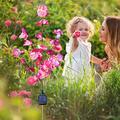 20LED Solar Phalaenopsis Branch Light Outdoor Garden Decoration LED Lawn Plug-in Light LED Solar Lights Outdoor Solar Flower Lights for Patio,Yard Decoration Solar Lantern LED Decor Outdoor Lamp