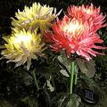 Suncatchers 2 PCS Solar Light - Chrysanthemum Solar Light Outdoor Waterproof Artificial Flowers Solar Lights Garden Decoration Lamp Solar Powered with Metal Pole for Garden Yard (Color : Pink)