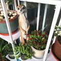 YAOLUU Garden Statues Outdoor Garden Resin Mongoose Crafts Statues Decoration Home Courtyard Balcony Cute Cat Animal Sculptures Decor Park Ornaments Outdoor Statues (Color : A)