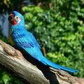 YAOLUU Garden Statues Resin Parrot Statue Wall Mounted DIY Outdoor Garden Tree Decoration Animal Sculpture for Home Office Garden Decor Ornament Outdoor Statues (Color : G)