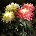 Solar Lights Outdoor Decorative, 2PC/3 PC Artificial Chrysanthemum Solar Garden Lights, Powered Landscape Lighting, Waterproof Solar Flower Lights for Garden Patio Lawn Yard Decorative (White-3 PC)