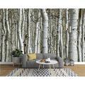 ZCLCHQ Wall Mural 3D White & Birch Tree Custom Wallpaper 3D Effect Large Mural Wall Murals Home Decor W250 X H170 cm