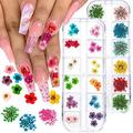 Tyemp 2 Boxes Nail Dried Flowers, 24 Colors 3D Real Natural Dry Flowers Mini Mixed Applique Nail Art Stickers Tips Manicure Decor Nail Art Supplies
