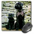 3dRose Giant Schnauzer, Mouse Pad, 8 by 8 inches