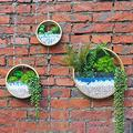 3 Pack Set Wall Planters , Gold Planter with Glass Metal Wall Succulent Planter Circle Iron Hanging Planter Vase for Herb,Small Cactus Perfect for Balcony , Room and Patio Decor