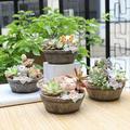 3 Types Cute Animal Meaty Flower Pot American Country Style Succulent Pots Resin Mini Flower Pots Fashion Flower Pots & Planters