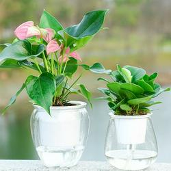 Windfall Self Watering Planter Pots Plastic White Flower Plant Pot Self Watering Plant Flower Pot Water Container Plastic Planter Home Garden Tool for All House Plants, Flowers, Herbs, Large