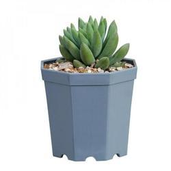 ZEROFEEL Plastic Octagonal Flower Pot Creative Thickened Succulent Flower Pot Balcony Flower White Elegant Plastic Flower Pot Blue 5 Pack