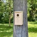 Wakefield Premium Bird Houses Screech Owl or Saw-Whet Owl House/Nesting Box for Small Owls