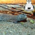 Reptile Heat Lamp 50W 100W Heat Emitter Lamp Bulb for Reptile Pet