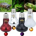Utoimkio 100W 2 Pack Ceramic Heat Lamp with 1-pcs Digital-Thermometer, Infrared Reptile Heat Emitter Heater Lamp Bulb for Pet Brooder Coop
