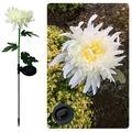 Solar Powered Flower Lights,Solar Garden Stake Lights Decorative Outdoor,Chrysanthemum Solar Landscape Path Lights For Garden,Patio,Yard,Lawn (Chrysanthemum Path Light)