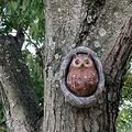 Owl Tree Hugger Statues,Garden Owl Tree Face Ornaments Resin Peeker Yard Art Outdoor Statue Whimsical Tree Animals Statues,Cute Owl Decor Outdoor Sculptures on the Tree-Owl 28x19x0.3cm(11x7.5x0.1inch)