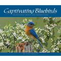 Captivating Bluebirds : Exceptional Images and Observations (Paperback)