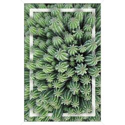 """Trends International Cactus - Group Wall Poster 24.25"""" x 35.75"""" x .75"""" White Framed Version"""
