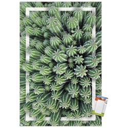 """Trends International Cactus - Group Wall Poster 22.375"""" x 34"""" Poster & Mount Bundle"""