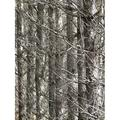 Canvas Print Pine Forest Dry Forest Scrub Thicket Pine Stretched Canvas 10 x 14