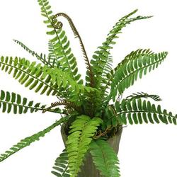 Primrue Artificial Potted Fern Pine Plants 12 Inches Set Of 2 Plastic Fake Plant In Pot Home Office Decor in Green, Size 12.0 H x 12.0 W x 3.5 D in