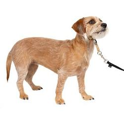PetSafe Gentle Leader Padded No Pull Dog Headcollar, Fawn, Small: 7 to 15-in neck