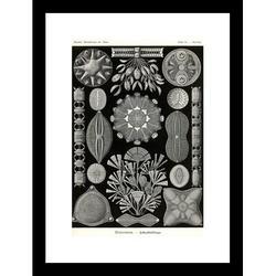 Buyenlarge Diatoms by Ernst Haeckel Framed Graphic ArtPaper in Black/Brown/White, Size 23.5 H x 17.5 W x 0.5 D in | Wayfair 64568-L1218BF