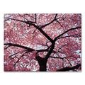 """""""Cherry Tree 18 x 24 Canvas Wall Art by CATeyes, Pink, 18""""""""X24"""""""""""""""