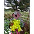 Home Bazaar Bird in Hand Wellsville 7.5 in x 8 in x 9.5 in Birdhouse Wood in Brown/Red, Size 7.25 H x 8.0 W x 9.25 D in | Wayfair HBA-1005S