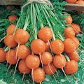 Parisian Carrot Seeds - 1 Lb ~320,000 Seeds - Non-GMO, Heirloom Vegetable Garden Seeds - Gardening - Mountain Valley Seeds