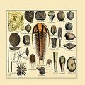 """Buyenlarge 0-587-17908-2-P1218 Trilobite and Fossil Sea Life Paper Poster, 12"""" x 18"""""""